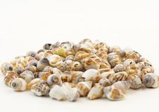 Seashell pile Royalty Free Stock Photo