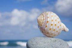 Seashell por la orilla Foto de archivo