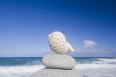 Seashell por la orilla Imágenes de archivo libres de regalías