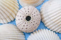Seashell portrait Royalty Free Stock Photos