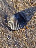 seashell zdjęcia stock