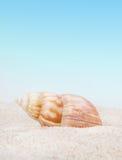 Seashell puro no Sandy Beach Foto de Stock