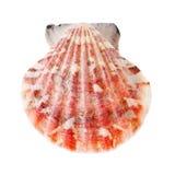 Seashell radial Fotografia de Stock