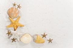 Seashell-Rand lizenzfreies stockbild