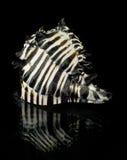 Seashell rayado Imagen de archivo libre de regalías