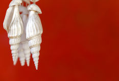 Seashell and red background Stock Photos