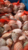 Seashell in red net Stock Photo