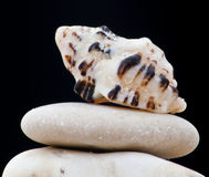 Seashell of the Red Sea Stock Photos