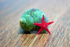 Seashell and a red star Royalty Free Stock Photos