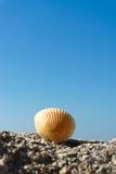 Seashell on rock Royalty Free Stock Photos