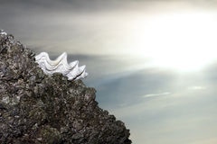 Seashell on rock at sunset sky Stock Photos