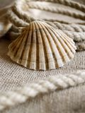 Seashell and rope. The seashell laying at rope and jute backround stock photo