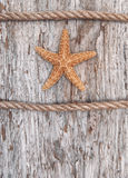 Seashell and rope on the old weathered wood Stock Images