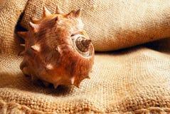 Seashell on sack. Royalty Free Stock Images
