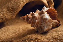 Seashell on sack. Stock Photo
