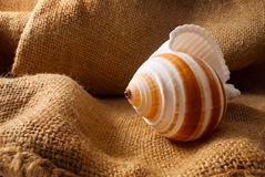 Seashell on sack. Stock Images