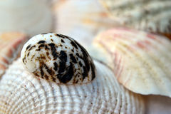 Snail shell. Closeup image of an interesting snail shell Royalty Free Stock Photo