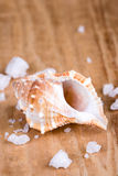 Seashell and salt Stock Photography