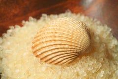 Seashell on salt pile Stock Photo