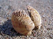 Seashell on Sand. Macro of the seashell on sand Royalty Free Stock Photo