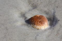 Seashell in Sand Royalty Free Stock Images