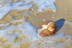 Seashell on sand Royalty Free Stock Photo