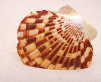 Seashell on sand Royalty Free Stock Image