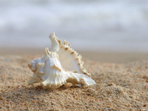 Seashell on a sand. Stock Photos