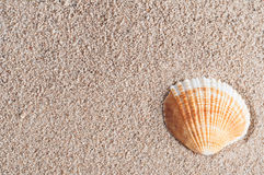 Seashell on Sand Stock Photography