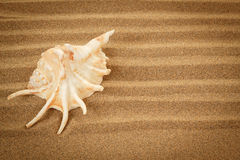 Seashell with sand as background Stock Photography