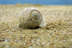 Seashell on the sand beach. Stock Images
