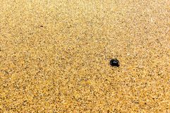 Seashell on the sand Stock Photos