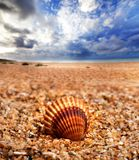 Seashell on sand beach. Seashell of anadara on sand beach and sea with blue cloudy sunlight sky at background Stock Photo