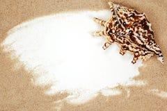 Seashell on sand beach frame royalty free stock photo