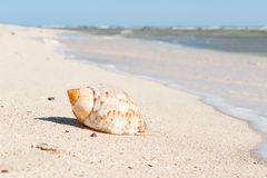Seashell on sand beach. With the ocean on the background Royalty Free Stock Photography