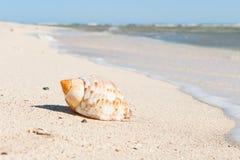 Seashell on sand beach Royalty Free Stock Photography