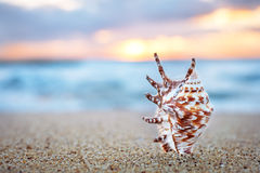 Seashell on the sand. stock photography