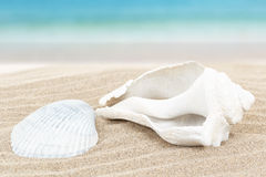 Seashell in sand with blue blurry background Royalty Free Stock Image