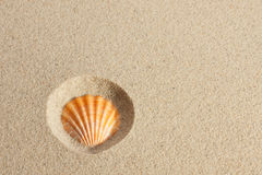 Seashell in the sand Stock Photo