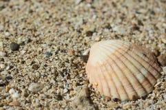 Seashell on sand Stock Image