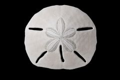 Seashell - sand dollar Royalty Free Stock Photos