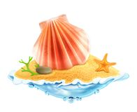 Seashell in the sand  illustration Royalty Free Stock Image