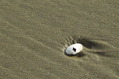 Seashell in the sand. Stock Photography