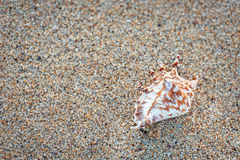 Seashell on the sand. Lonely Seashell on the sand Royalty Free Stock Photos