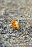 Seashell in the sand Royalty Free Stock Image