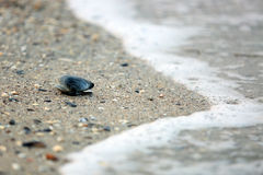 Seashell in the sand Royalty Free Stock Images