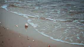 Seashell. In the sand on the northsea coast in Cuxhaven Stock Image
