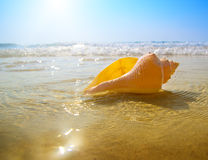 Seashell sand and ocean Stock Photography
