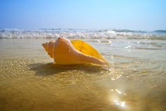 Seashell sand and ocean Stock Photos
