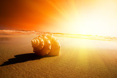 Seashell sand and ocean Stock Images